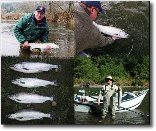 Kalama river fishing guide steelhead and chinook salmon for Kalama river fishing